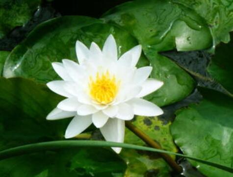 佛教中何为六波罗蜜