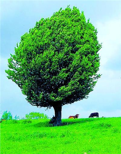 佛陀在菩提树下证悟了什么?