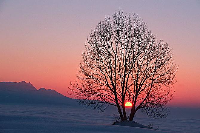 菩提树下的觉醒