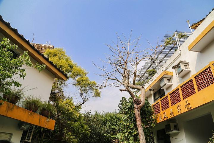 佛教僧团确立的重要基石:成立竹林精舍