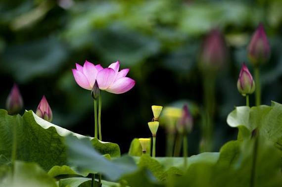 十地菩萨和佛的所见有什么异同