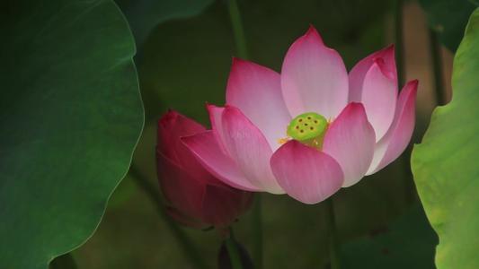 佛教修行三果阿那含果是啥意思