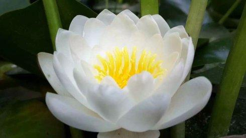 六度万行是修菩萨道的根本