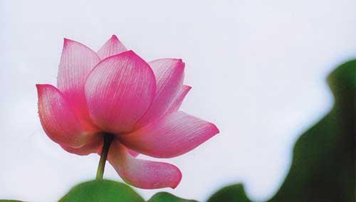 佛教十小咒包括什么