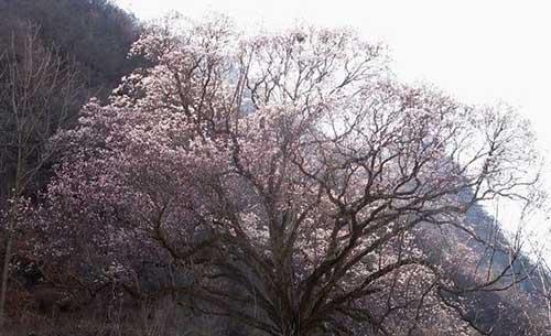 2008迎春平安法会新春开示节录