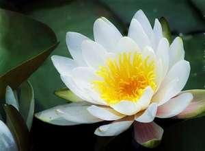 佛教的观音心咒
